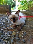 City cat goes nature
